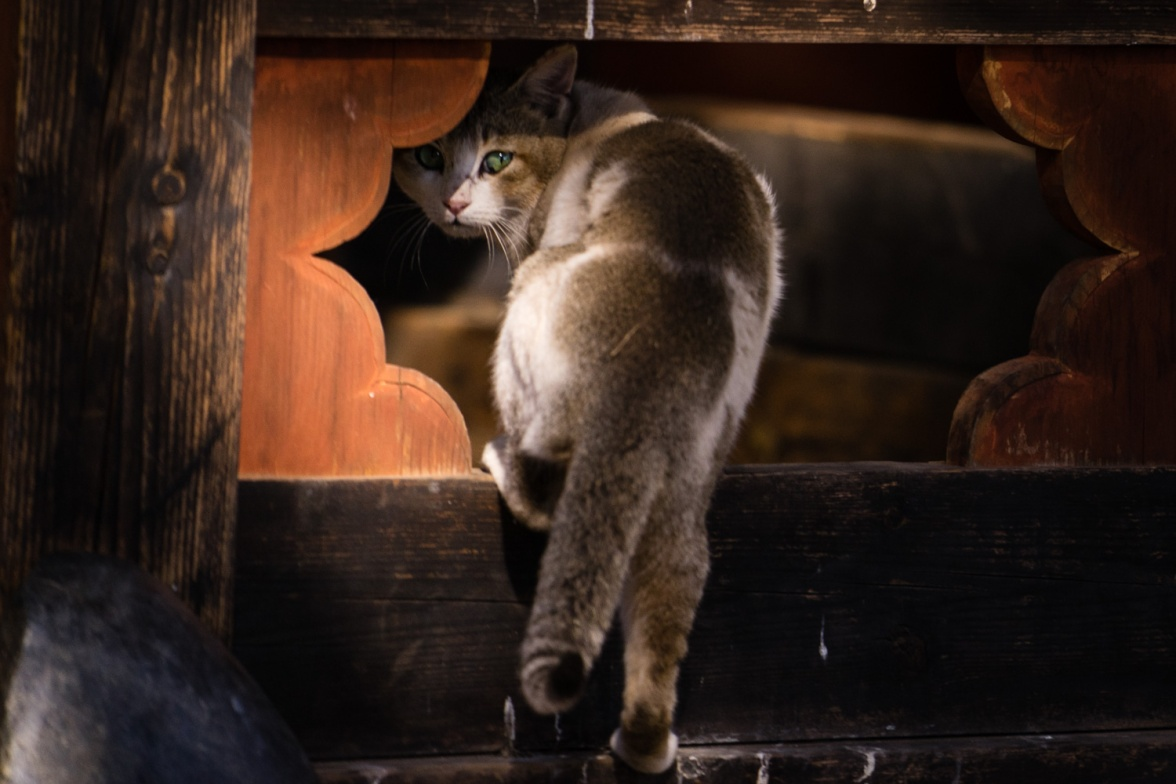 Picture of Cat at Festival in Bhutan by mcmessner Mary Catherine Messner