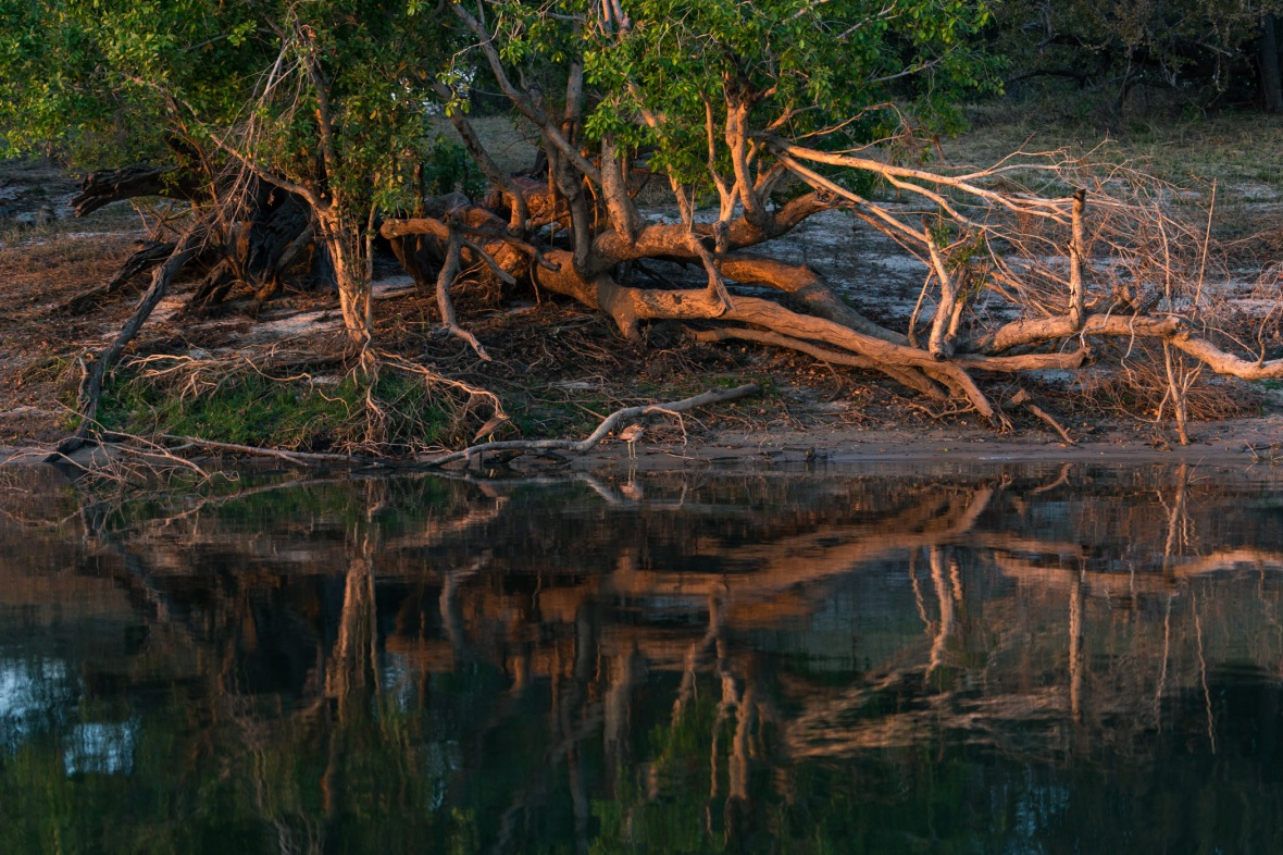 Picture of morning light on Zambezi River with birds, Zambia, Africa while on the 2016 Passport to Folk Art: South Africa trip with BJ Adventures