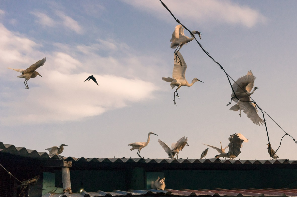 Picture of cat and crane bird in fish market in Thrissur, Kerala, India