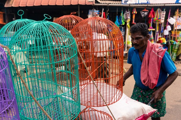 Pictures of people, places, and things in Cochin, Kerala, India by mcmessner Mary Catherine Messner