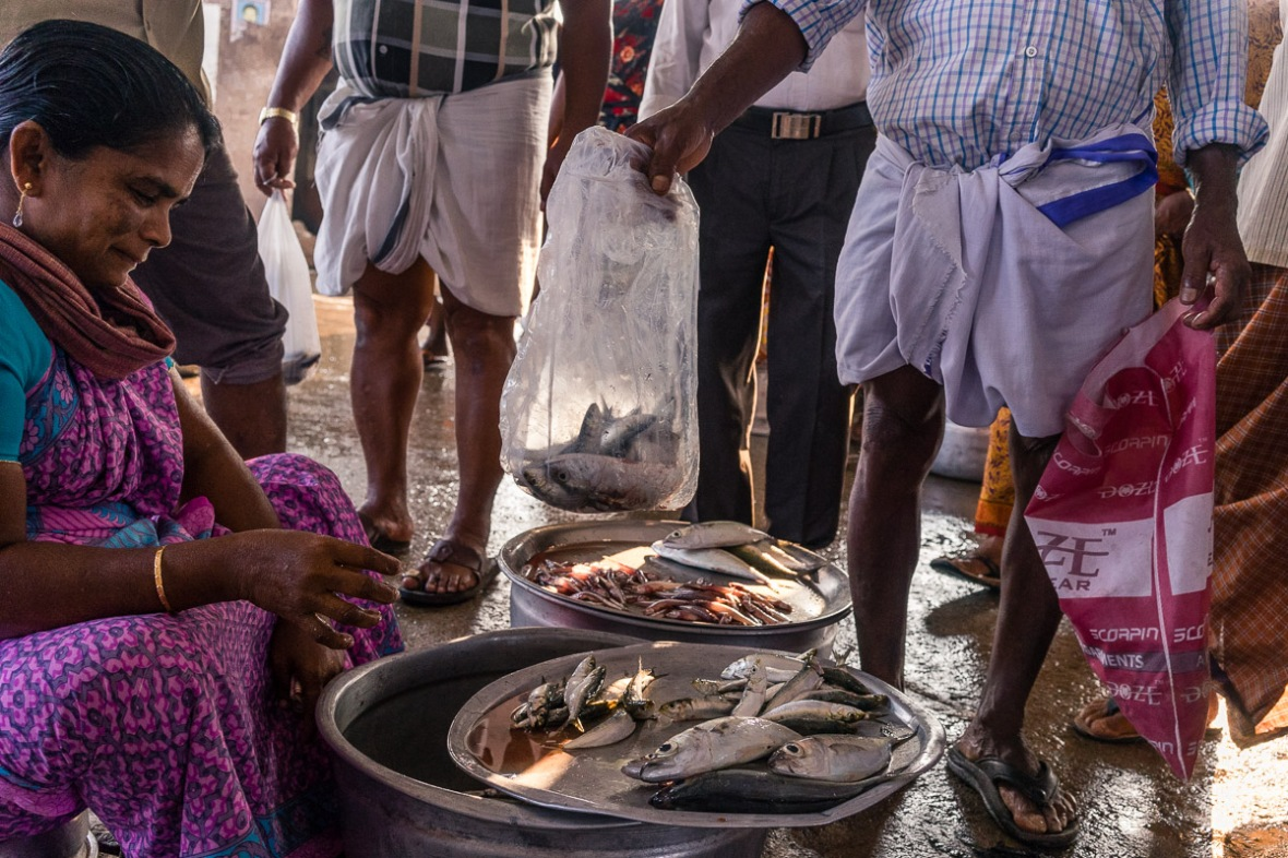 Picture of fish purchase in fish market in Thrissur Kollam, Kerala, India