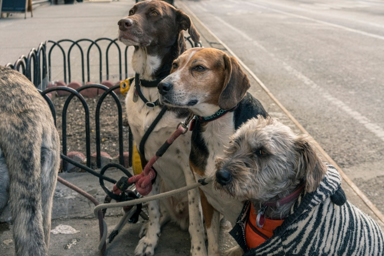 Travel and street photography of dogs and puppies made by mcmessner Mary Catherine Messner in New York City