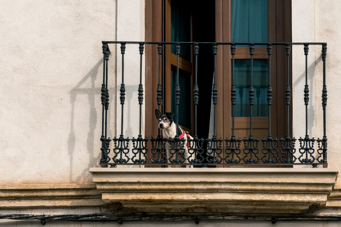 Travel and street photography of dogs and puppies made by mcmessner Mary Catherine Messner in Cordoba, Spain