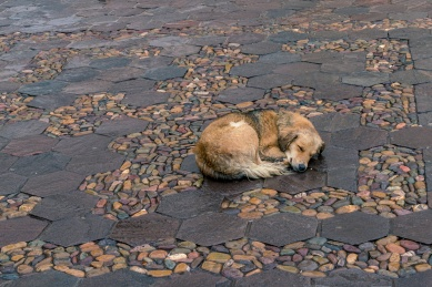 Travel and street photography of dogs and puppies made by mcmessner Mary Catherine Messner in Cuzco, Peru