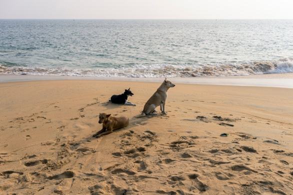 Travel and street photography of dogs and puppies made by mcmessner Mary Catherine Messner in Kollam, Kerala, India