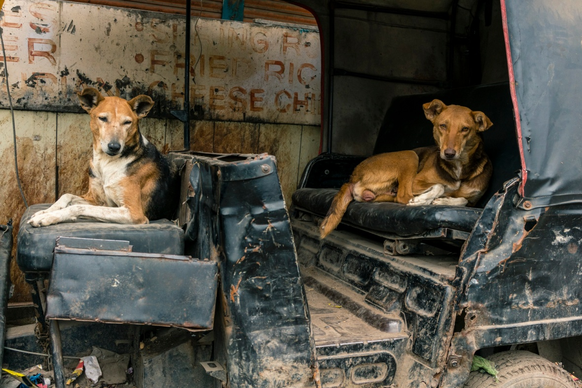 Travel and street photography of dogs and puppies made by mcmessner Mary Catherine Messner in Varanasi, India