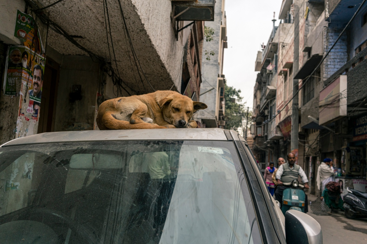 Travel and street photography of dogs and puppies made by mcmessner Mary Catherine Messner in Amritsar, India