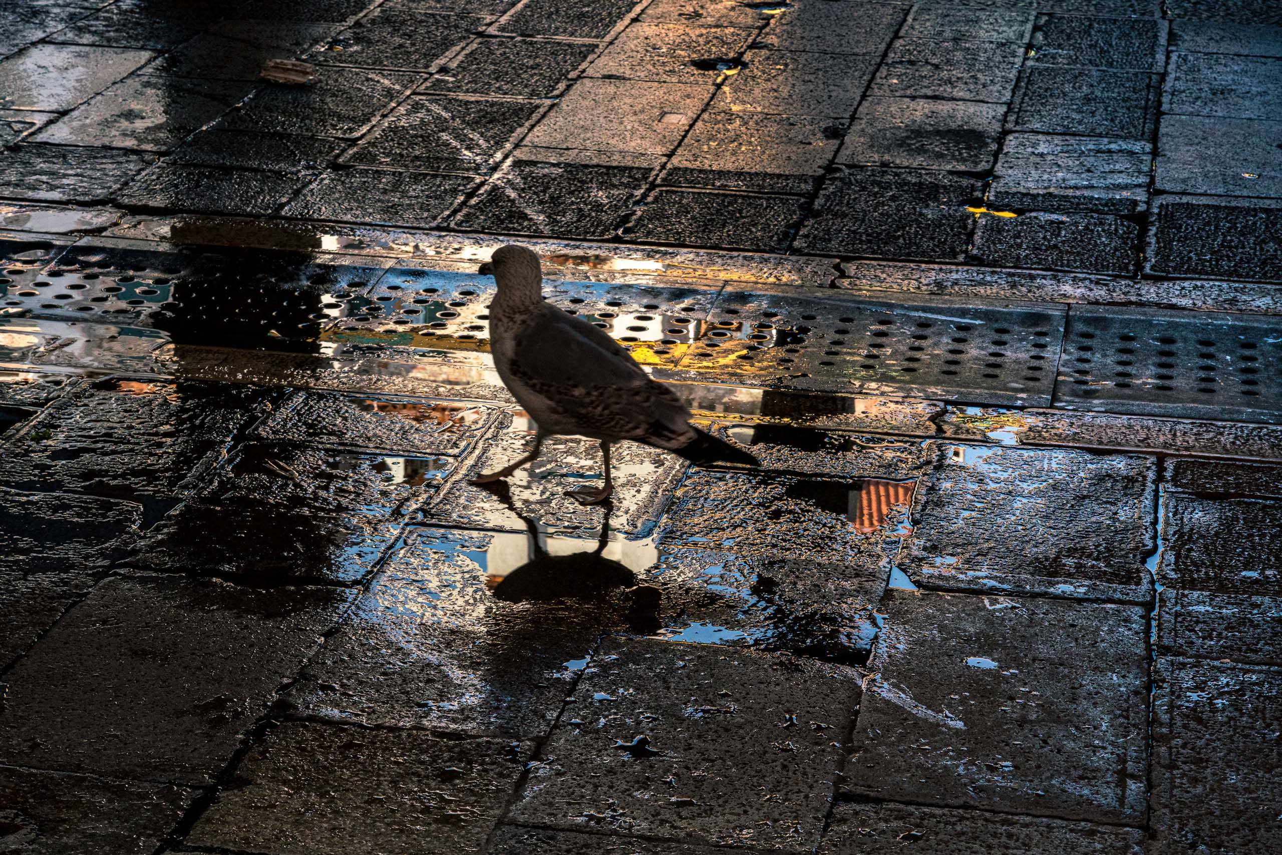 Travel and street photography of Venice or Venezia, Italy made by New York photographer Mary Catherine Messner (mcmessner).